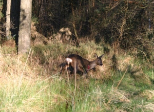 03 Deer